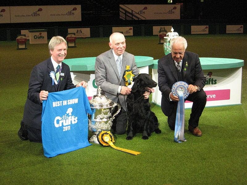 Find British - Crufts Dog Show